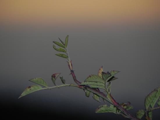 ramoscello immerso in un tramonto della costa sfocata messinese - Caronia (1407 clic)