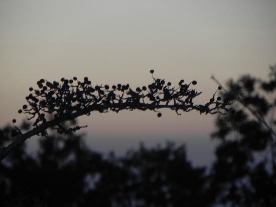 ramoscello immerso in un tramonto della costa sfocata messinese - Caronia (1455 clic)