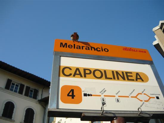 ASPETTANDO IL BUS - Firenze (1092 clic)