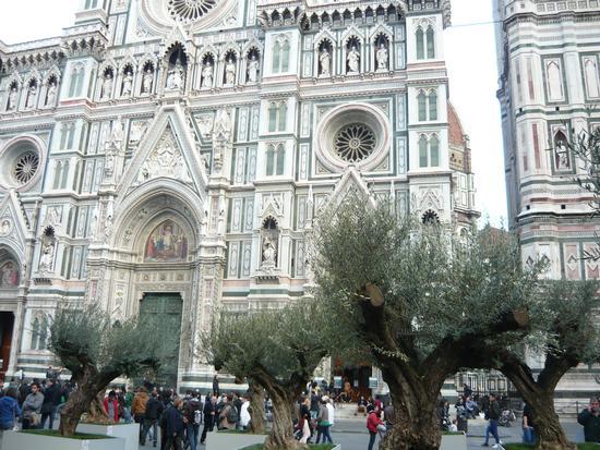 ULIVI IN PIAZZA DEL DUOMO - Firenze (854 clic)