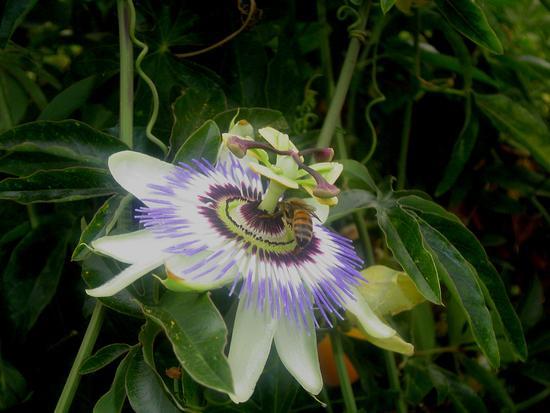 Un fiore nel bosco  - Calci (1394 clic)