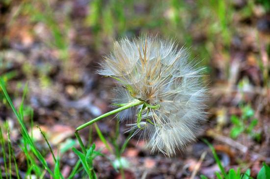 basterà un alito di vento...... - SAN CESARIO DI LECCE - inserita il 21-Nov-12