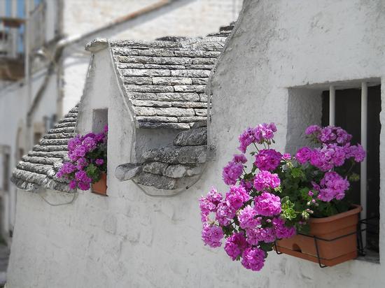 Finestrella infiorata - Alberobello (2776 clic)