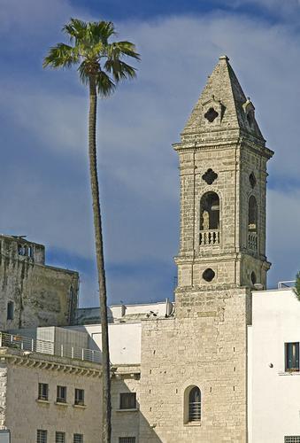 La palma e il campanile - Bari (1108 clic)