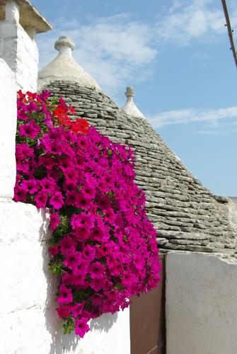 trulli - Alberobello (1252 clic)