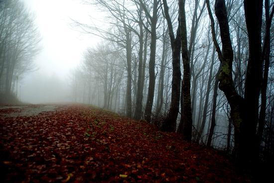 Nebbia autunnale  - Piobbico (4029 clic)