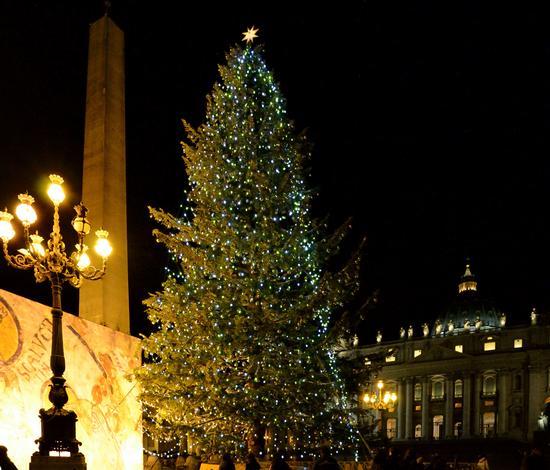 L'albero di Piazza San Pietro - Roma (2240 clic)