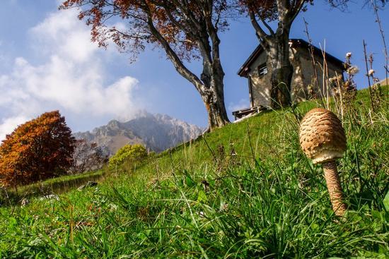 MAZZA DI TAMBURO - Piani resinelli (9314 clic)