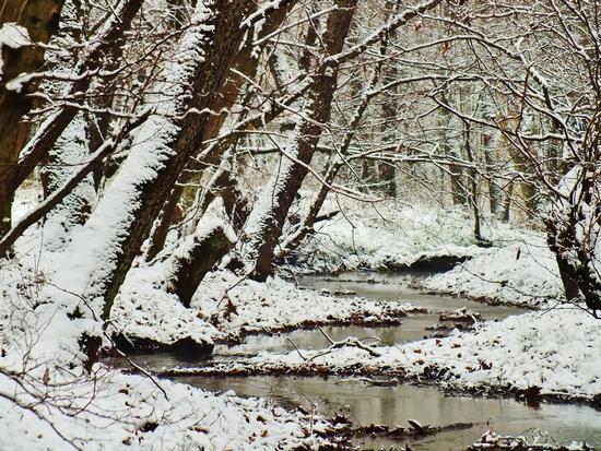 Dopo la nevicata - AROSIO - inserita il 19-Dec-12