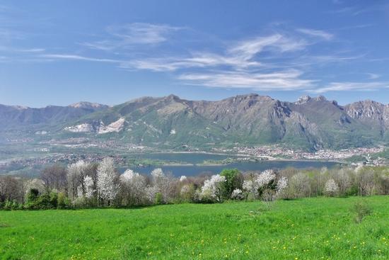 CILIEGI IN FIORE - Galbiate (813 clic)