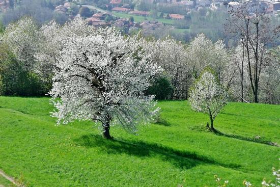 BIANCO VERDE - Galbiate (770 clic)