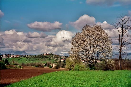 COLORI DI PRIMAVERA - Besana in brianza (683 clic)
