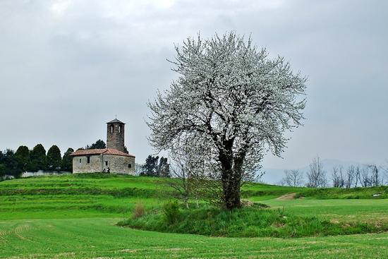 CILIEGIO - Garbagnate monastero (3303 clic)