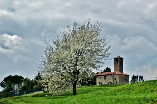 UN ASPETTO DELLA PRIMAVERA - Garbagnate monastero (956 clic)