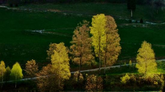 CONTRASTI IN PRIMAVERA - Moggio (1089 clic)