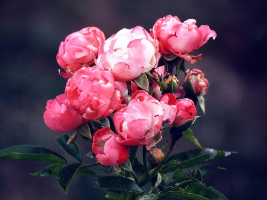 Flower Power - Montignoso (738 clic)
