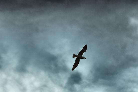 il volo - Palermo (1356 clic)