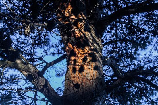 Alberoso albero... (224 clic)
