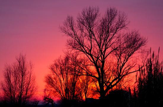 incontro al tramonto - Musile di piave (1421 clic)