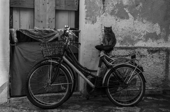 Il gatto del centro storico - Lecce (1437 clic)
