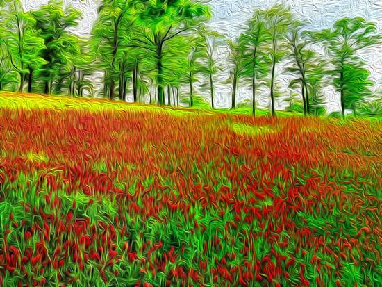 Campo fiorito - Torre del serpe (3018 clic)