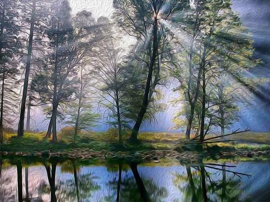 Magica natura - Camigliatello silano (3935 clic)