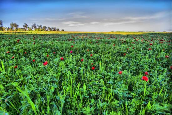 I colori della primavera - Otranto (2767 clic)