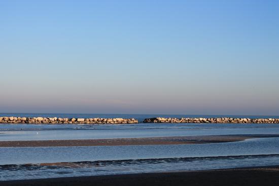 - Bellaria igea marina (820 clic)