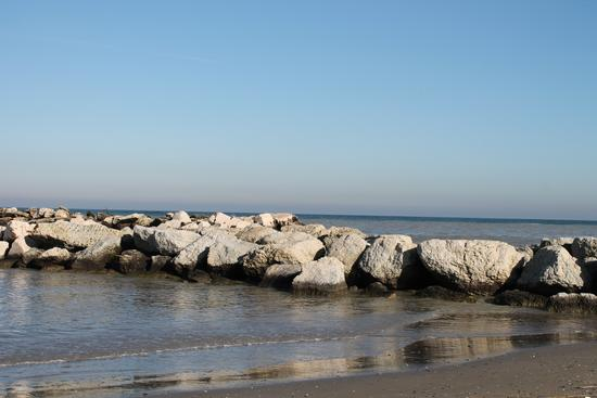 - Bellaria igea marina (644 clic)