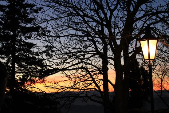 - Bellaria igea marina (641 clic)