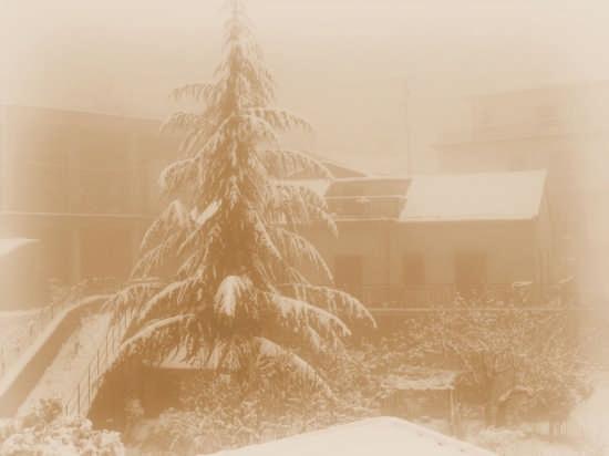 Neve - Mistretta (3174 clic)