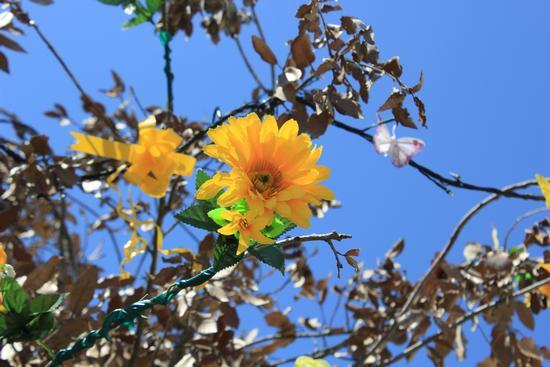 Flowers - Comacchio (1060 clic)