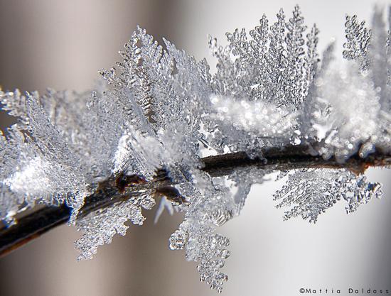 Ice Crystals - Lago di ledro (3672 clic)