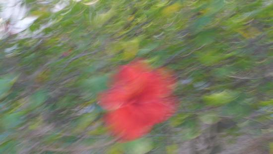 Ibiscus nella nebbia - Marina di modica (1574 clic)
