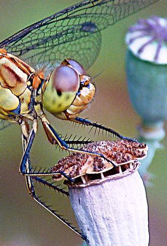 Zampe acuminate - Marina di modica (2951 clic)