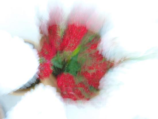 Fragola con panna - Modica (2033 clic)