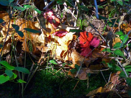 Autunno: colori su corso d'acqua - Modica (1369 clic)