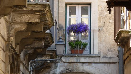 Tocco floreale in via Grimaldi - Modica (1124 clic)