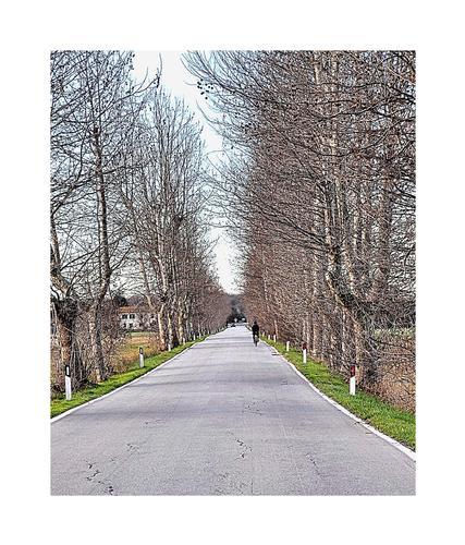 viale d'autunno - Coltano (1142 clic)