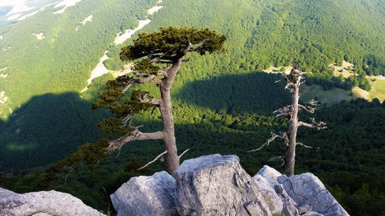 Pini loricati sul Monte Pollino - Massiccio del pollino (950 clic)