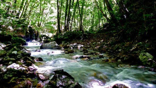 Nei pressi di Orsomarso- fiume Argentino (942 clic)