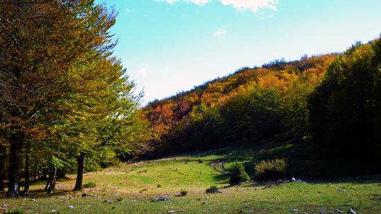 pollino-la foresta della fagosa - Civita (1308 clic)