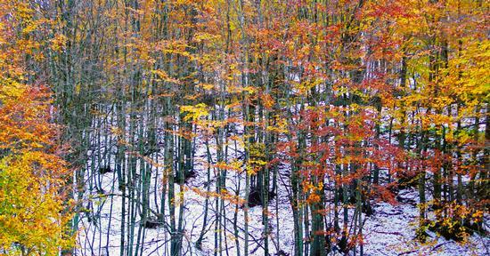 autunno in sila - SILA - inserita il 28-Mar-13