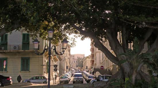 Ficus secolare a Reggio Calabria (1399 clic)