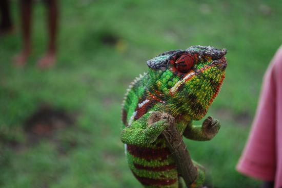 i colori del Madagascar (448 clic)