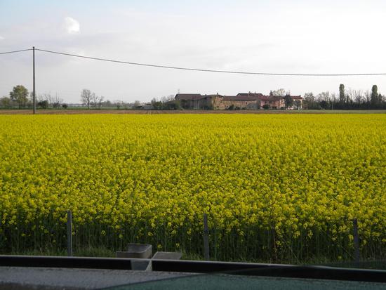 colori di primavera - Seriate (828 clic)