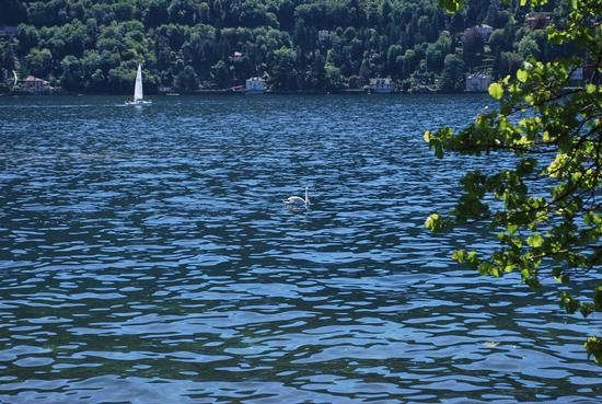 lago di como  - Cernobbio (1053 clic)
