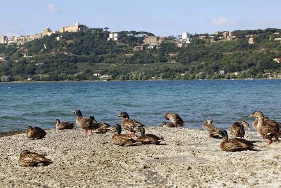 Lago Albano - Lago di albano (1044 clic)