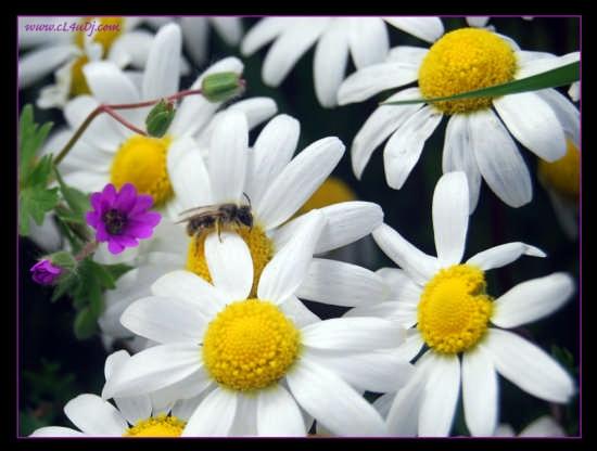 Primavera? - Aprilia (2998 clic)