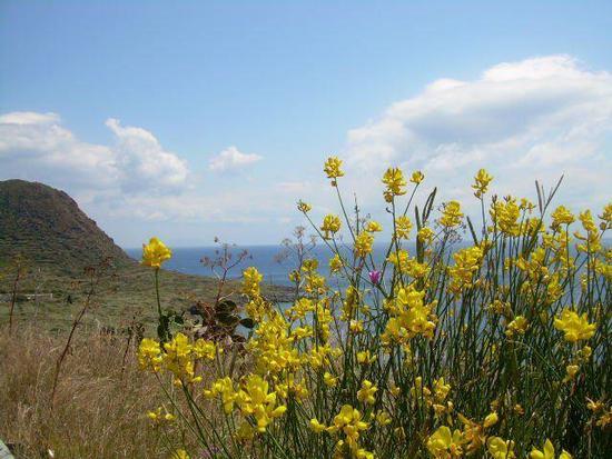 Sicilia, Messina, Filicudi, Le Punte (1558 clic)